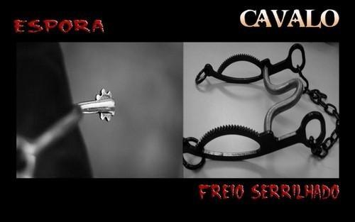 CAVALO2.jpg