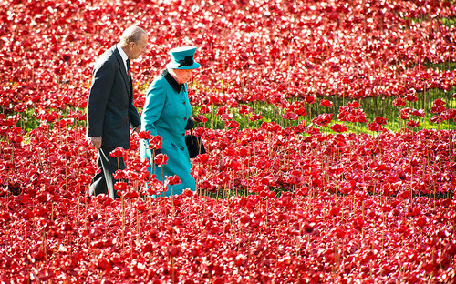 POTD_Queen_poppies_3075387k.jpg