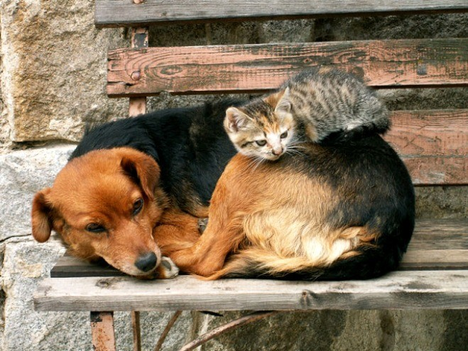 animais-abandonados.jpg