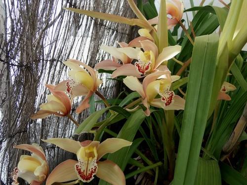 Orquídeas 1.jpg