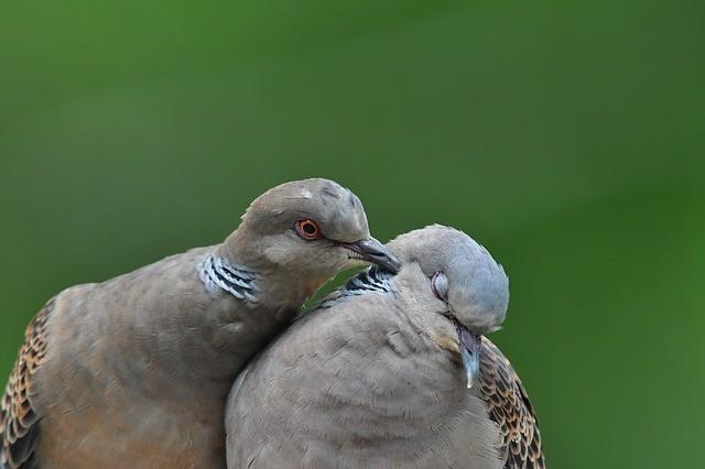 bird-3245827_640.jpg