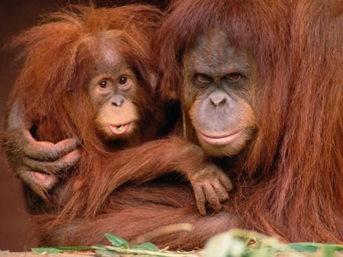 macacos-280.jpg