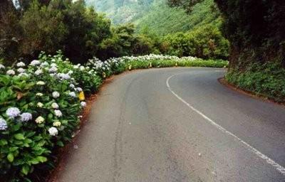 Uma estrada apenas sua - Silvia Schmidt.jpg