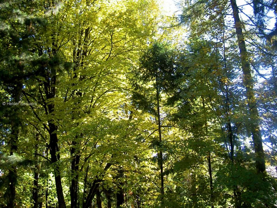 Árvore - Dia Mundial - HS.jpg