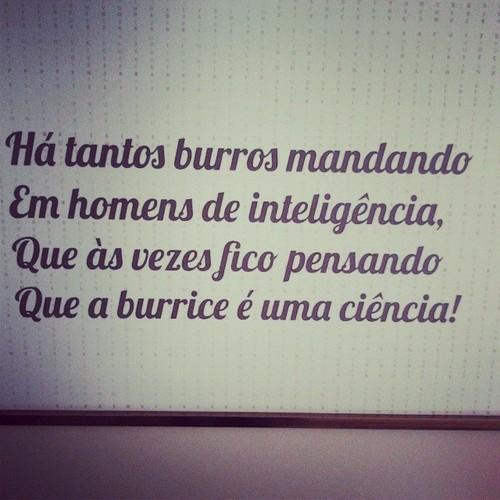 burrice.jpg