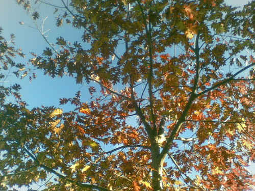 Árvore Outono. Foto original de F.M.C.L. 2014.jpg