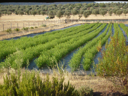 MM-agricultura.jpg