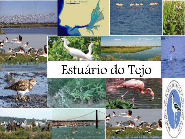 esturio-do-tejo-1-638.jpg