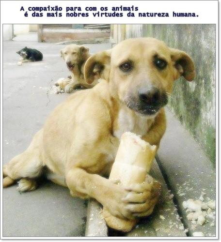 Compaixao.pelos cãesjpg.jpg