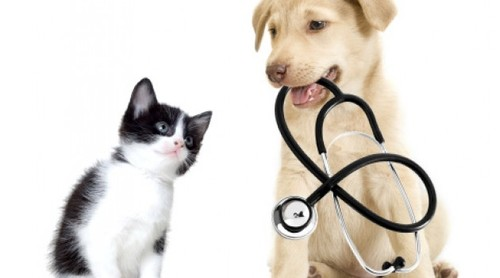 Cão e Gato.jpg