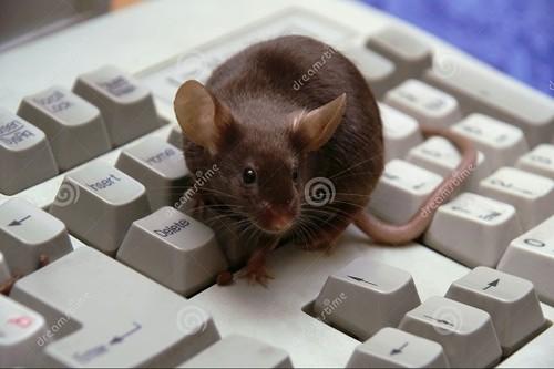 计算机键盘鼠标-1817491.jpg