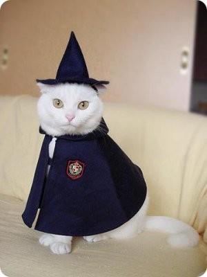 Fotos-de-disfraces-para-gatos0.jpg