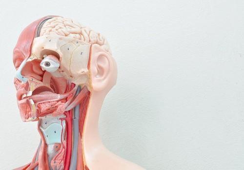 10 Partes do corpo humano...2.jpeg