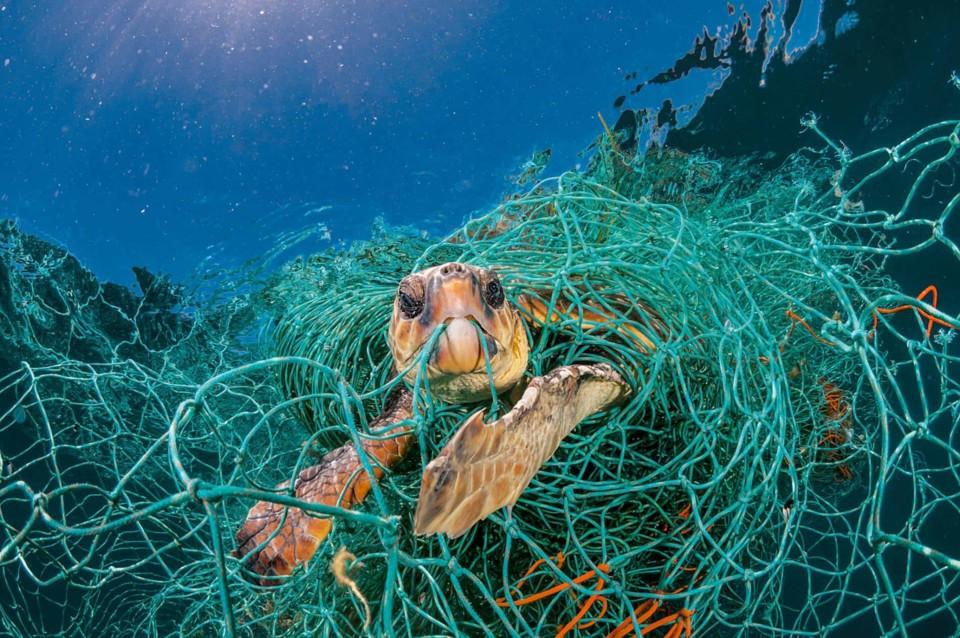 plastic-waste-single-use-worldwide-consumption-ani