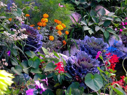 jardim-com-flores.jpg