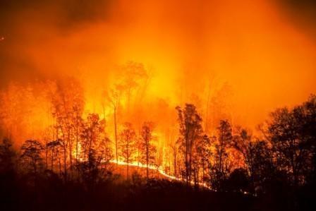 Cobra-Pfizer-GE-Healthcare-safe-in-Sweden-fires_wr