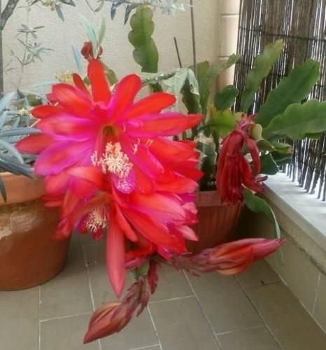 cactus orquídia.jpg