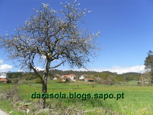 OlivFrades_Santiago_19.JPG