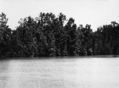 Rio Cacheu.jpg