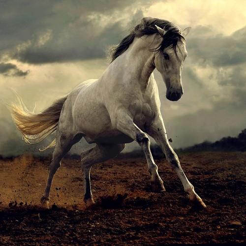 wild-horses-2.jpg