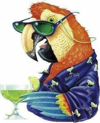 rir-o-melhor-rem-dio-38-o-papagaio-suado-383996-1.