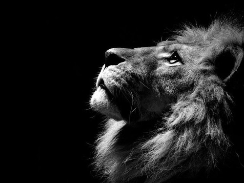 lion-thought-[1].jpg