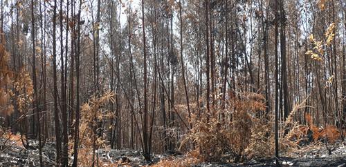 floresta_incendios_mata_queimada.jpg