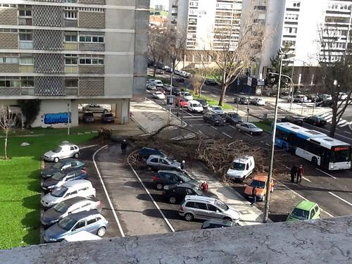 Queda de árvore, Lisboa (M.M.Torres, 2013)