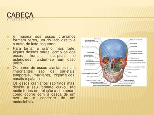 sistema-esqueletico-divisao-do-esqueleto-3-638.jpg