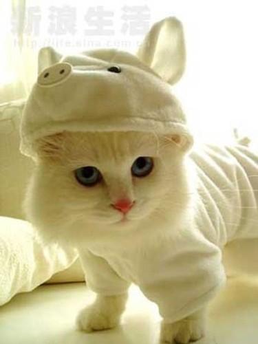 459946-Fotos-de-gatos-fantasiados-01.jpg
