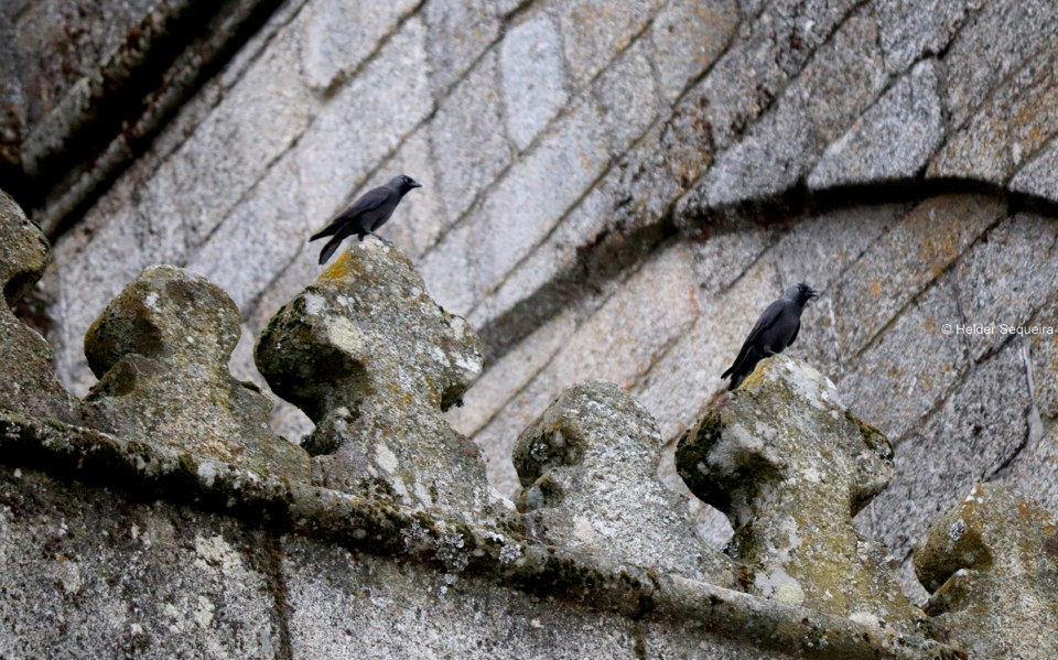 Vigilantes da Catedral - HS.jpg