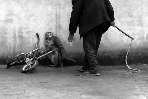 MonkeyTrainingForACircus-YongzhiChu.jpg