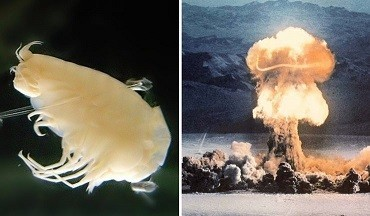 1557746524_Bomb-Carbon-from-Cold-War-Nuclear-Tests