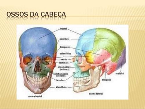 sistema-esqueletico-divisao-do-esqueleto-5-638.jpg