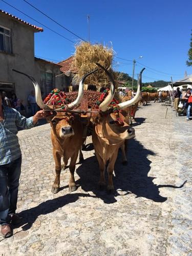 Padornelo Feira dos Tojais w.jpg