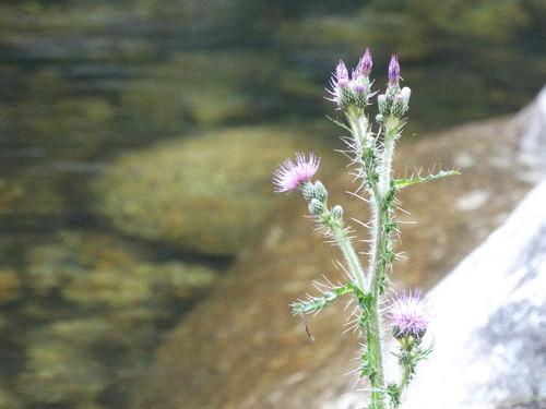 flores 5.JPG