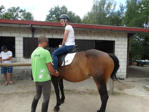 cavalos 2.JPG
