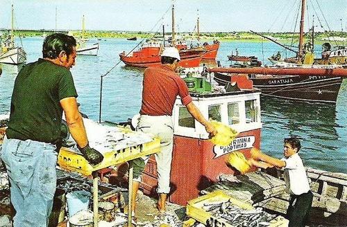 pesca sardinha.jpg