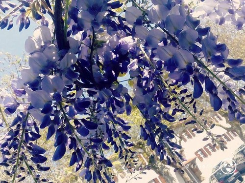 7_A3C_Chuva de flores.jpeg