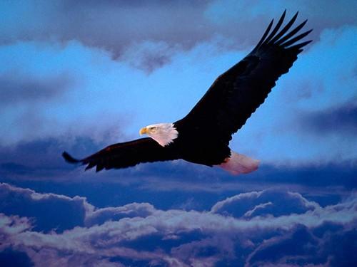o voo da aguia.jpg