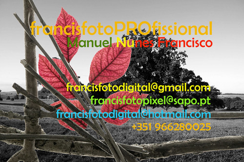 francisfotoPROfissional.jpg