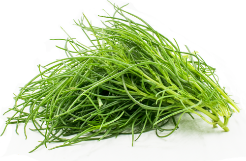 agretti.png