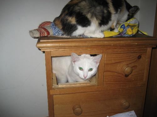 gato 6.JPG