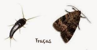 traças1.jpg