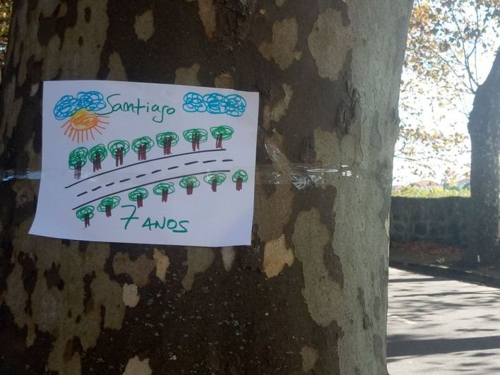 Árvores Cabedelo.jpg