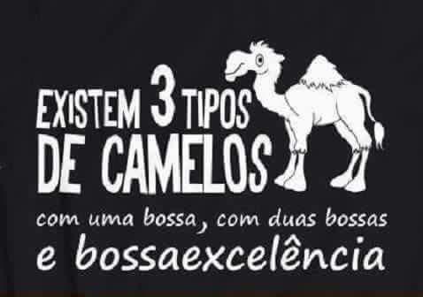 1-3 camelos.jpg