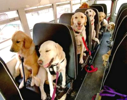 dog_bus.jpg