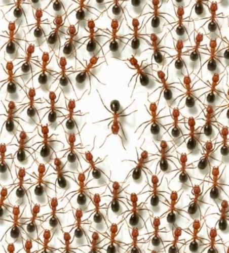 Formigas+Uma.jpg