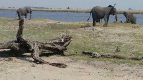 Botswana 254.jpg