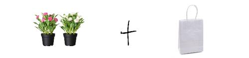 Formula FINAL (2)rfa.png